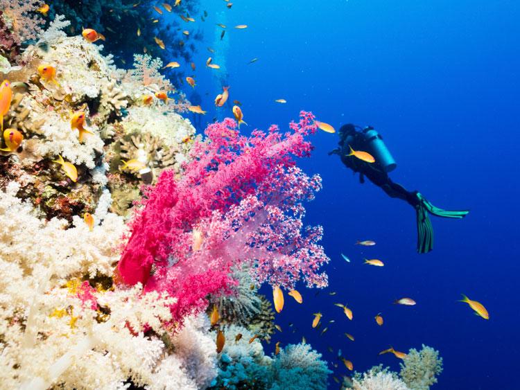 Voyage plongée sous-marine : trois destinations et un conseil